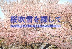 【Views】1672『桜吹雪を探して』1分52秒