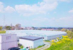 【Views】1704『のんほいイチゴ園とよはし』2分