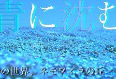 【Views】1709『青の世界、ネモフィラの丘〜ひたちなか海浜公園〜』2分10秒