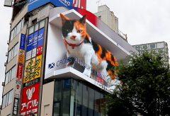 オムニバス・ジャパン、制作した新宿東口の3D巨大猫のメイキングを解禁