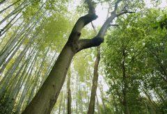 【Views】1742『静かなる竹林』1分53秒