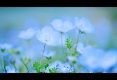 【Views】1747『Flower Ocean』49秒