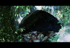【Views】1752『明月院 紫陽花が招く季節』5分30秒