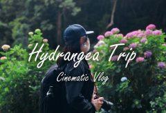【Views】1761『Hydrangea Trip』2分19秒