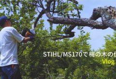 【Views】1771『STIHL/MS170で梅の木の伐採と釣り』2分35秒