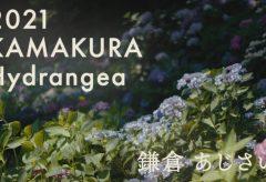 【Views】1791『2021 KAMAKURA Hydrangea』2分26秒