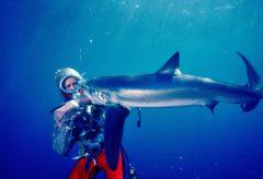 ブラックマジックデザイン、『サメと遊ぶ伝説のダイバー』のアーカイブ映像がCintel Scanner C-Drive HDRdでデジタル化されたことを発表